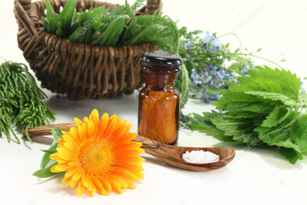 Fresh medicinal herbs and globules on a light background  Stock Photo #10629432