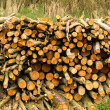 Log Pile — Stock Photo #10103244