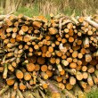 Stock Photo: Log Pile