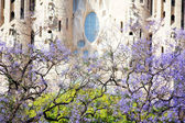 Spring time in Barcelona — Stock Photo