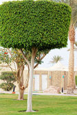 緑の木 — ストック写真