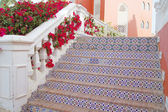 Stairs and bougainvillea — Stock Photo