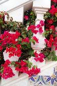 Strairs and flowers — Stock Photo
