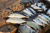 Fish market in Kerala, India — Stock Photo