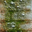 Old grunge brick wall — Stock Photo #8306254