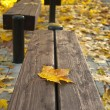 Maple-leaf on a bench — Stok fotoğraf