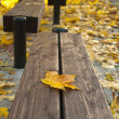 Maple-leaf on a bench — Stock Photo
