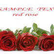 Border of red roses — Stock Photo