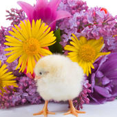Kyckling och blombukett — Stockfoto