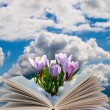 Open book with crocuses — Stock Photo