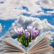 Royalty-Free Stock Photo: Open book with crocuses