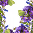 Stock Photo: Spring flowers and butterflies on a white background.