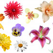 Stock Photo: Collage from flowers on white background.