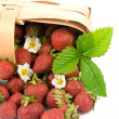 Ripe red strawberries in a basket — Stock Photo