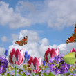 Composition from spring flowers and butterflies on a background of the clou — Stock Photo #8398357