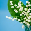Lily of the valley on a blue background — Foto Stock