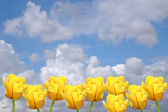 Yellow tulips on a background of the cloudy sky. A spring card. — Foto Stock