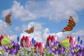 Composition from spring flowers and butterflies on a background of the clou — Stock Photo