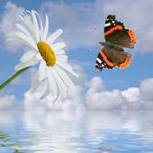 Chamomile and butterfly on a background of the cloudy sky. — Stock Photo