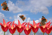 Red tulips and butterflies on a background of the cloudy sky. A spring card — Stock Photo