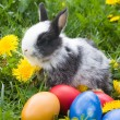 The small rabbit and colourful easter eggs in a grass — Stock fotografie