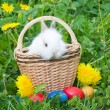 Stock Photo: The small rabbit and colourful easter eggs in a grass