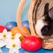 The small rabbits and colourful easter eggs — Stock Photo