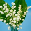 Lily of the valley — 图库照片