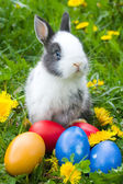 The small rabbit and colourful easter eggs in a grass — Stock Photo
