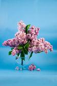Bouquet di lilla — Foto Stock