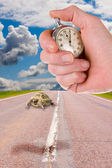 Turtles and hand with a stop watch — Stock Photo