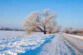 Paisaje de invierno hermosa. — Foto de Stock