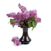 Lilac bouquet in a black vase — Stock Photo