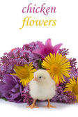 Chicken and bouquet — Stock Photo