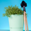 Watercress salad in a pot — Stock Photo