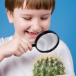 Boy with magnifying glass and cactus — Stock Photo