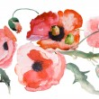 Watercolor Poppy flower — Stock Photo #10110906