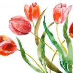 Beautiful tulips flowers — Stock Photo #10110916
