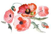 Watercolor Poppy flower — Stock Photo