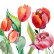 Stock Photo: Watercolor illustration of Beautiful summer flowers