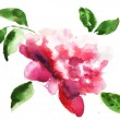 Stock Photo: Watercolor illustration of Beautiful peony flowers