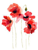 Stylized Poppy flowers illustration — Foto de Stock