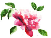Watercolor illustration of Beautiful peony flowers — Stock Photo