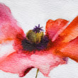 Watercolor Poppy flower — Stock Photo