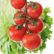 Fresh red tomatoes on the plant — Stock Photo
