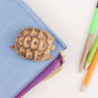 Turtle posing series — Stockfoto