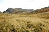 Grassland on mountains in autumn — Stock Photo