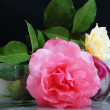 Beaufitul roses in studio, nice scene — Stock Photo #8844238