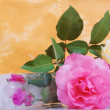 Beaufitul roses in studio, nice scene — Stock Photo