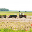 Stock Photo: Tractor with plow on field